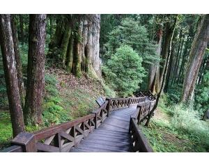 巨木群栈道印刻着阿里山千年的岁月