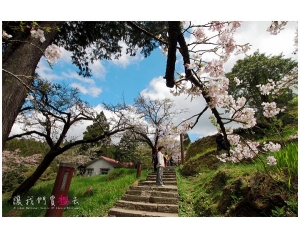 沼平公园阿里山赏樱花最佳地点