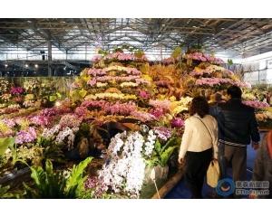 台南国际兰花展数千兰花争艳盛开