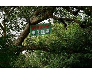 台南四草绿色隧道越来越热门号称台版亚马逊河