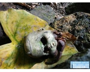 美丽神秘的绿岛出现鬼娃寄巨蟹被证实是艺术恶搞