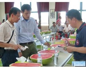 新竹县西瓜甜度、口感、质量上皆属上乘