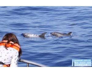 台东不单单有美味海鲜还有有趣的赏鲸、阿美族文化
