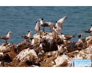 13只神话之鸟现踪创新高马祖赏鸥倒数计时