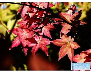 秋冬季节台湾玩什么?欣赏当季花卉带你感受大自然的妖娆