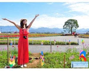 2015台中新社花海节11.7登场持续1个月迎来五颜六色的花朵