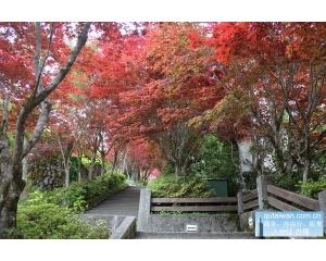 台湾枫叶就要大红了!东部、南部5处赏枫景点