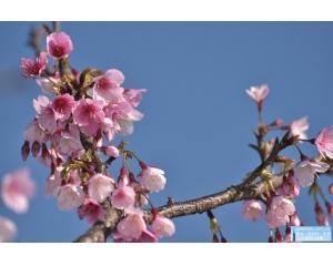 台北平等里樱花地址,乘坐捷运、公交车怎么去平等里樱花