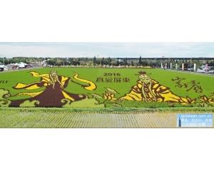 屏东轰动业界的素还真稻田采用五彩稻谷种植绝非喷漆