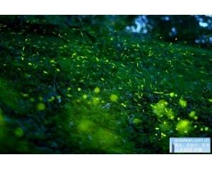 从南到北台湾10大赏萤地点看虫儿飞